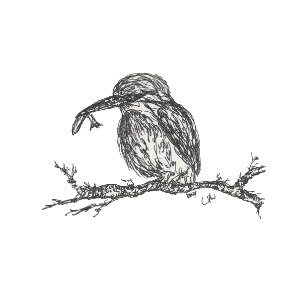 Feathers resplendent in aquamarine